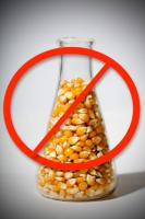 Why Genetically Engineered Crops Threaten Your Health