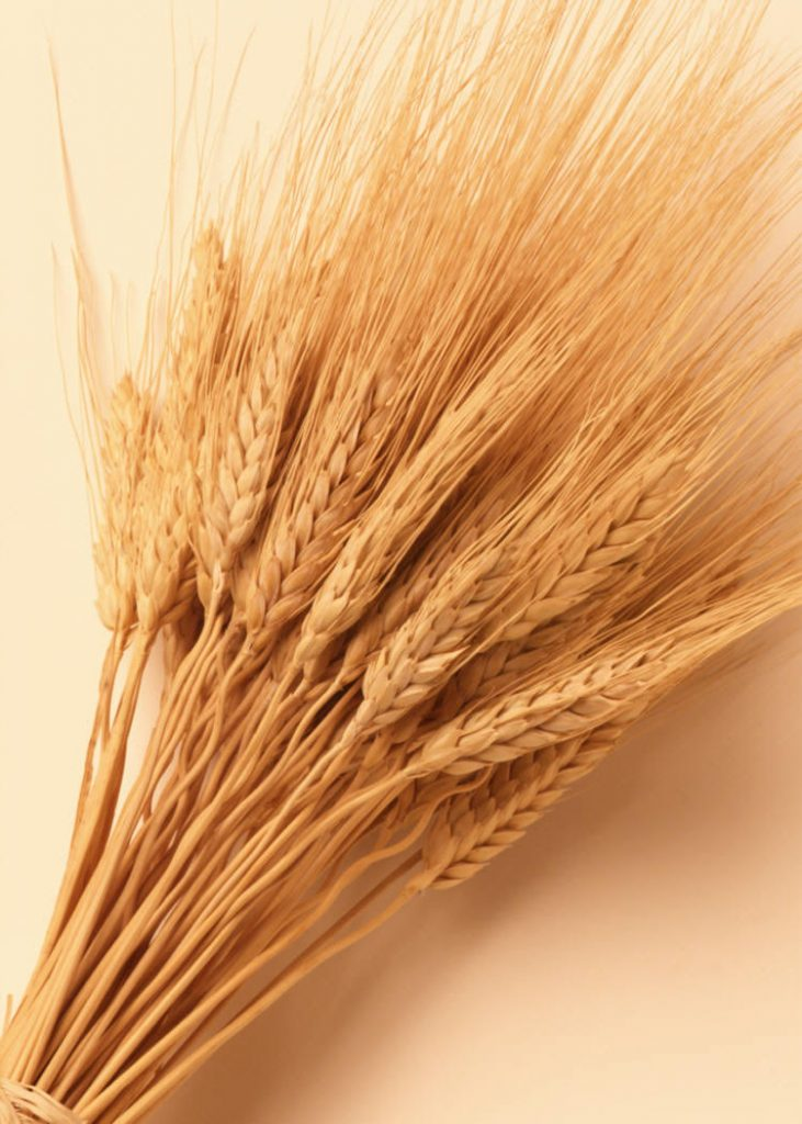 Gluten Sensitivity: Why is FDA Dragging Its Feet?