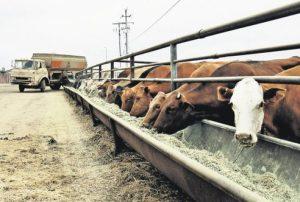 fda-antibiotics-agriculture.jpg.492x0_q85_crop-smart