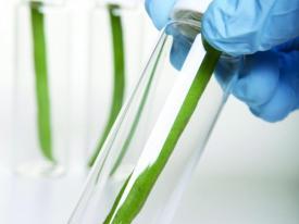 Plant test tube_0