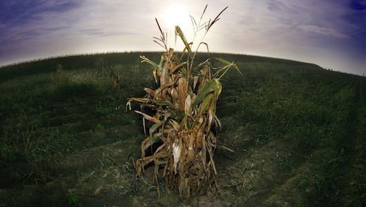 """""""Monsanto Protection Act"""" Triggers a Firestorm of Protest and Public Outrage"""