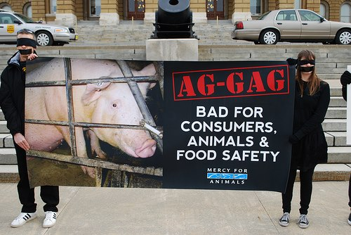 Ag-Gag Bills: Proof Your Activism Brings Results!