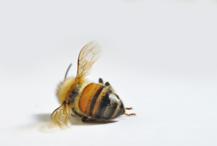 Disappearing Honeybees? That's Easy—Factory Farm Them!