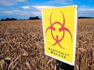 GM-biohazard