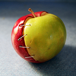 "A GMO ""Frankenapple"" Might Be Coming Soon to a Store Near You!"