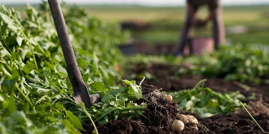 Small and Organic Farmers Survive Latest Round of FDA Food Rulemaking