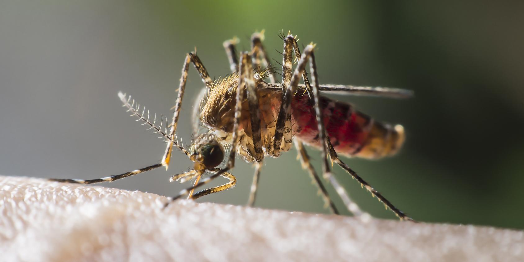 No More Frankenmosquitoes!