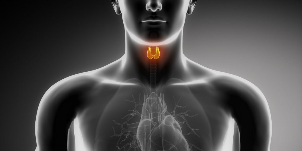 Natural Thyroid Medications at Risk