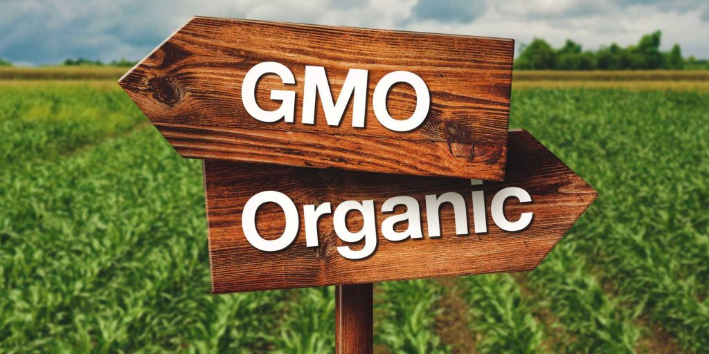 GMOs Spread to Related Crops, including Organic