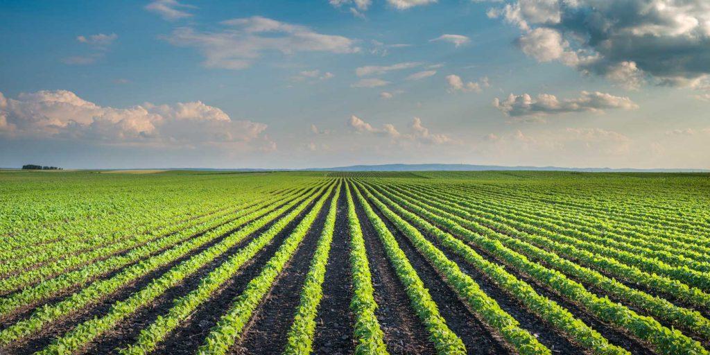 GM Promotes Monoculture