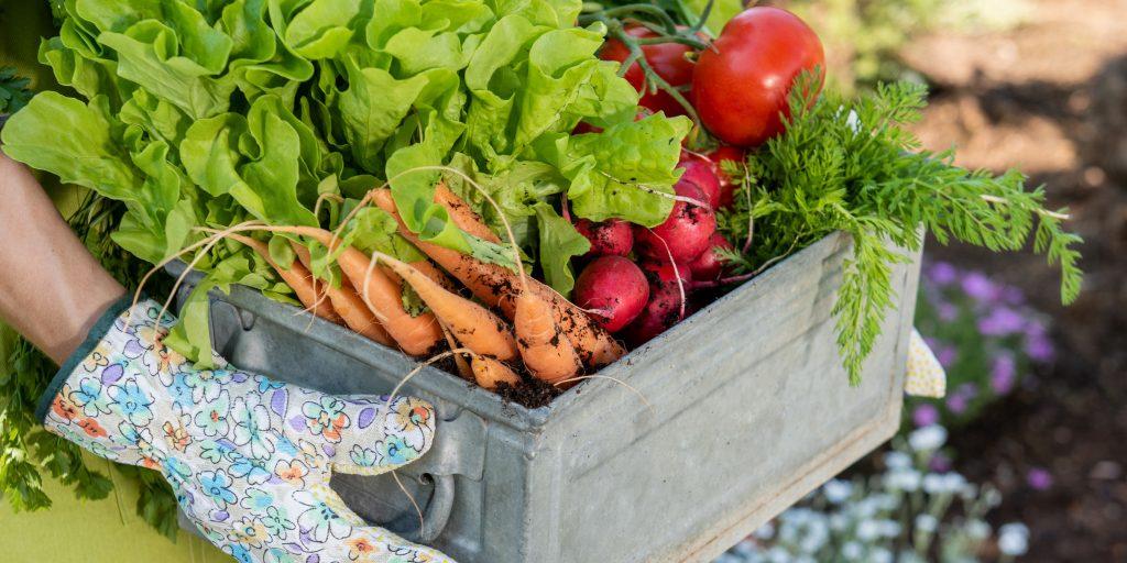 Keep Organics GMO Free