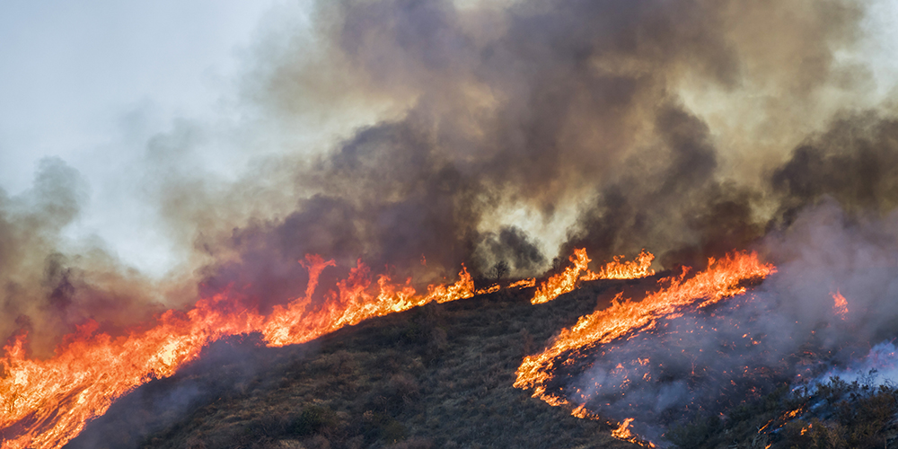 The COVID Wildfire Link